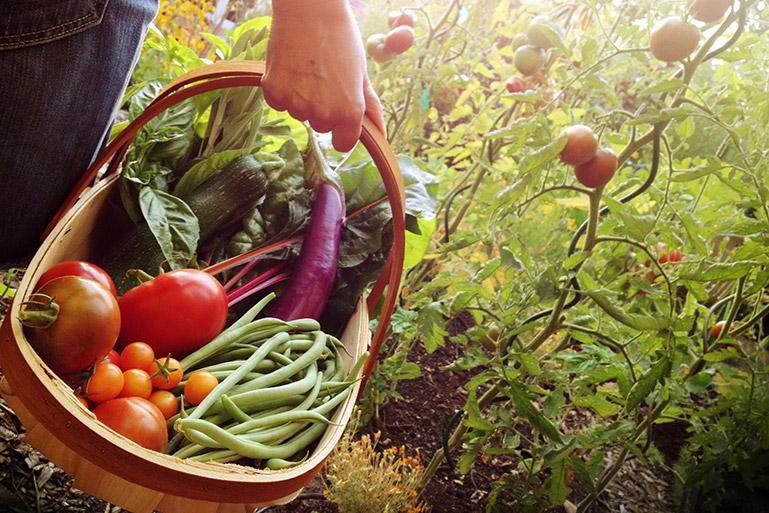 50 por ciento verduras y hortalizas