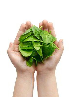 Hojas de verdura 2 manos